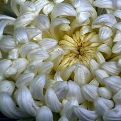 En el centre de la flor
