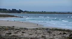 DSC_0754 (afagen) Tags: california pacificgrove asilomarstatebeach montereypeninsula asilomar beach pacificocean ocean