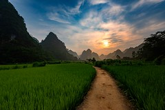 Mai Village Morning (Rod Waddington) Tags: vietnam vietnamese asia mai minority village rural rice crop karst mountains landscape path trees nature morning