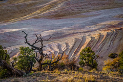 Dead Tree and Sandstone Layers (Jeff Sullivan (www.JeffSullivanPhotography.com)) Tags: grand staircase escalante national monument utah usa november canon eos 6d photo copyright 2016 jeff sullivan allrightsreserved fall golden hour lone tree sandstone geology