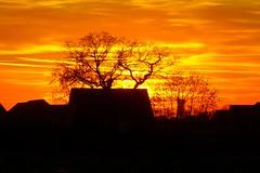 Winter sunset (Ugborough Exile) Tags: gnosall stafford staffordshire sunset midlands england uk sony rx100iv 2018 treesdiestandingup trees