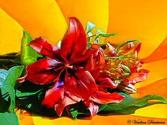 Flowers For Mum (Veselina Dimitrova) Tags: flowers mum colourful clickcamera clickthecamera awesome mothersday greatphotographers photooftheday pictureoftheday picoftheday sony beautiful