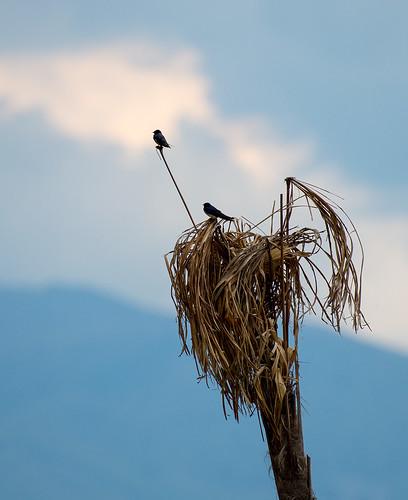 Nest ©  Andrey