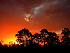 Brilliant sunset this evening...26 Dec 2018 (elphweb) Tags: hdr highdynamicrange sunset orange sky skies tree trees forest woods wood clouds cloudy cloud australia nsw