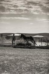 Horse (Robert Mehlan - Munich) Tags: robertmehlandesert marokko wüste atlasgebirge pferd canon5dmkii