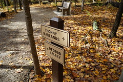 Your choice (D. C. Wilson) Tags: autumn outdoor nature tree leaves fall sunlight shadow road text letters sign path wood grass ohio sony
