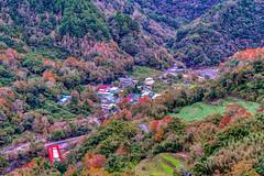 秀巒~楓之谷~  The Valley Of Maple (Shang-fu Dai) Tags: 台灣 taiwan 新竹 尖石 秀巒 楓葉 楓之谷 maple formosa nikon sonya7r2 sony2870mm 樹 溪谷