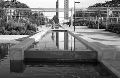 190104_Parc_Central_018 (Stefano Sbaccanti) Tags: bw blackandwhite bn parccentral valencia minox35gl kentmere400 bellinihydrofen analogicait analogue analogico argentique spain spagna selfdeveloped 2019 city