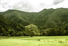 Wangapeka (Janis Sabanovs) Tags: newzeland tree green nature wangapeka montains grass hiking