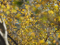 Spain Andalusia Sierras de Cazorla © Spanien Andalusien © España Andalucía (hn.) Tags: cazorla provinciadejaen sierradecazorla sierra gilillorunde spain europe andalusia andalucia spanien eu europa andalusien heiconeumeyer copyright copyrighted tp2018anda es españa sierrasdecazorla laub baum herbst blatt blätter tree leaves fall autumn arbol laubblatt nature natur gegenlicht contraluz backlight flora vegetation