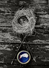 birds nest (Kris J Knight) Tags: birdsnest nest skull stilllife bnw blackandwhite twigs wood nature