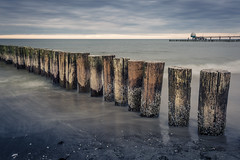 full of shells (mad_airbrush) Tags: 5d 5dmarkiii canon deutschland germany balticsea ostsee buhnen wood water sea seascape 1740mm ef1740mmf4lusm zingst