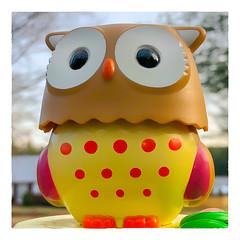 Owl (Timothy Valentine) Tags: home vowel owl 2018 w234 1218 eastbridgewater massachusetts unitedstates us h278 o macromonday