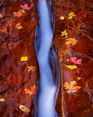 River Through the Rock (Bereno DMD) Tags: river water stream creek flow rock red sand sandstone symmetry glow reflection reflectedlight reflected cool coolview panoramic pan pano focus focusstack subway zion zionnationalpark leaf leaves color saturated falls fall erosion erode vertical nikon nikond850 southwest utah adventure trail hike hiking longexposure longshutter