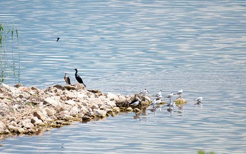 Birds ©  Andrey