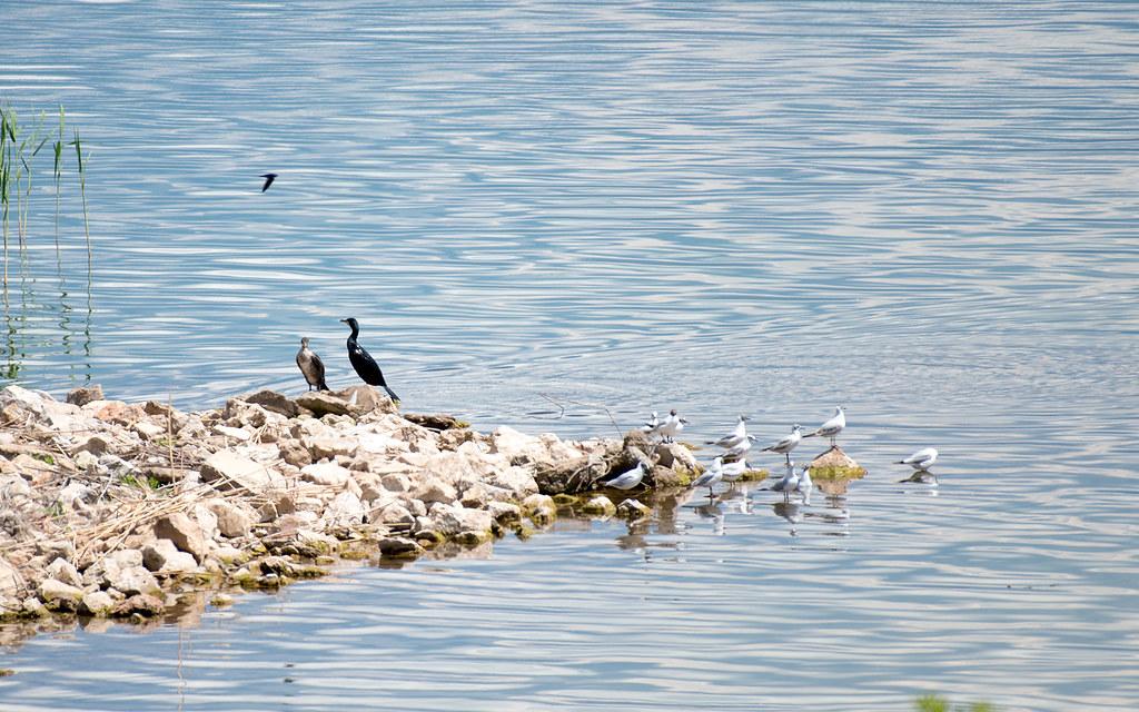 фото: Birds