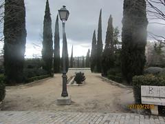 Cypress trees, Parque de Enrique Tierno Galvan, 1386,  Madrid (d.kevan) Tags: plants hedges trees paths streetlamps views parksandgardens parqueenriquetiernogalvan 1986 madrid skylines buildings cypresses cobbles