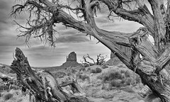 Monument Valley Impression in Black and White (W_von_S) Tags: monumentvalley impression blackwhite schwarzweis arizona southwest südwesten usa us america amerika vereinigtestaaten unitedstates landschaft landscape paysage paesaggio panorama natur nature indian western outdoor tree baum felsen rocks wüste desert clouds wolken werner wvons sony sonyilce7rm2 composition pov 2017 skancheli