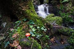 Toadstool, Fairy Glen (nickcoates74) Tags: 3leggedthing 12mm 12mmf20 a6300 fairyglen ilce6300 longexposure parbold samyang sony ultrawide wigan lancashire uk appleybridge