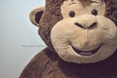 (lucyrogersphotography) Tags: monkey teddy softtoy lucyrogersphotos closeup ruleofthirds 50mm still life stilllife