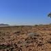 Lone quiver tree