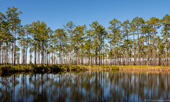 Okefenokee Swamp (Jim Frazier) Tags: 2019 201801floridatrip beautiful beauty bluesky conifers flora forest fws ga georgia january jimfraziercom lake landscape living magicforest marshwetland nationalwildliferefuge natural nature naturepreserve nwr okefenokeenationalwildliferefuge okefenokeeswamp palms park pines plants pond preserve preservenationalwildliferefugenwrrefugenaturepreservenaturepreserveusfwsfwspark q4 refuge roadtrip scenery scenic sunny swamp trees usfws vacation water winter woodland woodlot woods jfpblog instagram fastpictures f10 inspiredbyansel f20