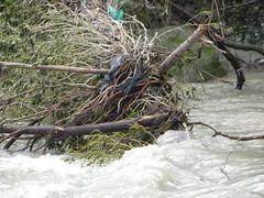 DSCN9945 (Gianluigi Roda / Photographer) Tags: springtime april 2013 creeks birds