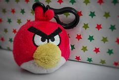 an angry bird (sallymichelsen) Tags: macromondays vowelsa