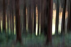 Glenarm Forest (paulmcilwaine) Tags: ballymena northernireland unitedkingdom gb