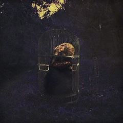 caged (brookeshaden) Tags: fineartphotography conceptualphotography selfportrait birdcage caged trapped freedom thinktankphoto giveaway creativity brookeshaden