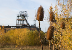 Chatterley Whitfield 05 nov 18 (Shaun the grime lover) Tags: autumn derelict industrial coal mine colliery staffordshire chell tunstall chatterleywhitfield pit headstock headgear teazels