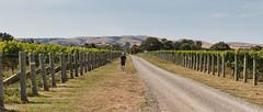 190128 101545 (Vibeke Friis) Tags: martinborough wellingtonregion newzealand nz