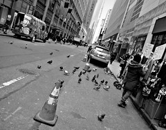 Pigeonhattan (Robert S. Photography) Tags: street scene bw monochrome winter manhattan newyork pigeons buildings people sony dsch55 iso160 january 2019