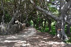 Baie de Kuto (Seventh Heaven Photography *) Tags: kuto bay isle pines new caledonia south pacific islands trees shade shadow