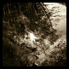mirror (luci_smid) Tags: mirroring watersurface watercapture trees branches impression sepia monochrome