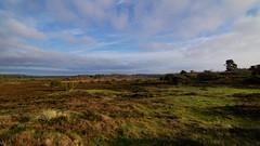 Open landscape (Steenjep) Tags: landskab landscape himmel sky vrads hede heath lyng tree grass