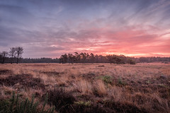 Just before sunrise (Dannis van der Heiden) Tags: sunrise beforesunrise dentreek grass trees sky clouds nikond750 d750 tokina1628mmf28 amersfoort leusden netherlands naturepark nature landscape plants colours morning