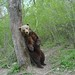"""LiBearty Bear Reservation in Zarnesti, Transylvania (9) • <a style=""""font-size:0.8em;"""" href=""""http://www.flickr.com/photos/131242750@N08/32303335948/"""" target=""""_blank"""">View on Flickr</a>"""