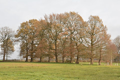 Langs het Bodenpad 3 (Snoek2009) Tags: boermarkenwandeltocht flal drenthe bodenpad nature coulissenlandschap green trees graas fields walker explore