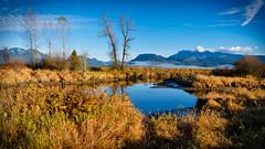 Alouette River (Sworldguy) Tags: mapleridge alouetteriver watershed mountains westcoast lowermainland fall nature habitat reflections sanctuary grassland morning