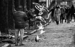 Totem. (Adrien GOGOIS) Tags: tokina atx af840 80400mm f4565 people street noir et blanc black white monochrome bw bird seagull gull line bokeh telephoto man feed animal fly channel canal saint martin paris france scene perspective funny