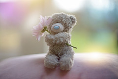 Kindness... (KissThePixel) Tags: teddybear kindness flower stilllife stilllifephotography bokeh light focus macro bear toy nikon nikondf 50mm 12 f12 january cute