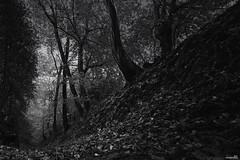 Là-bas (Un jour en France) Tags: monochrome forêt arbre feuille noiretblanc noiretblancfrance picardie hautsdefrance canoneos6dmarkii canonef1635mmf28liiusm