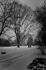 (jsrice00) Tags: leicamtyp240 28mmsummicronasph indianapolis winter snow tree lights