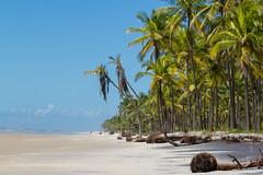 Comandatuba - Bahia (Marcelino Dias) Tags: ilha comandatuba beach coconuts tree bahia una praia deserta natureza nature paradise