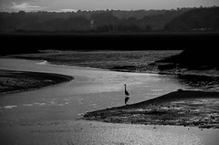 Sliding into Evening (Bud in Wells, Maine) Tags: heron silhouette silverefexpro sunset webhannetriver wells maine bw monochrome niksoftware hss