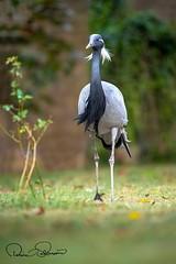 Title (TARIQ HAMEED SULEMANI) Tags: sulemani tariq tourism trekking tariqhameedsulemani winter wildlife wild birds nature nikon