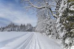Beautiful winter scenery (morin.luce) Tags: winter cold snow quebec evergreens trees sky blue season canon 5d mark iii tamron 2470mm