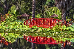 Red Reflections (red stilletto) Tags: flower flowers summer famousflickrfive bluelotuswatergarden yarrajunction warburton reflection reflections bridge lotusflower lotusflowers lilypad lake water trees waterlily waterlilies cannas cannasflowers yarravalley
