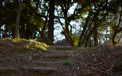Sunny climb (KaeriRin) Tags: japan shinjuku sony sony7m2 55mm18
